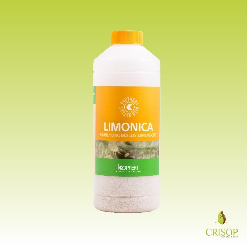 Limonica en flacon de 12500 indivudus