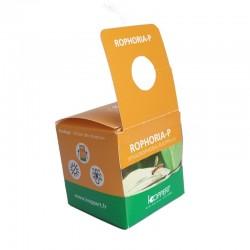 Boîte contenant des pupes de Sphaerophoria rueppellii