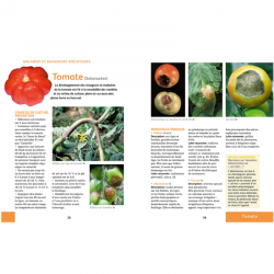 Extrait 5 - Soigner bio tous les légumes - Elisabeth et Jérôme Jullien