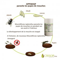 Cycle d'action Appiwasp