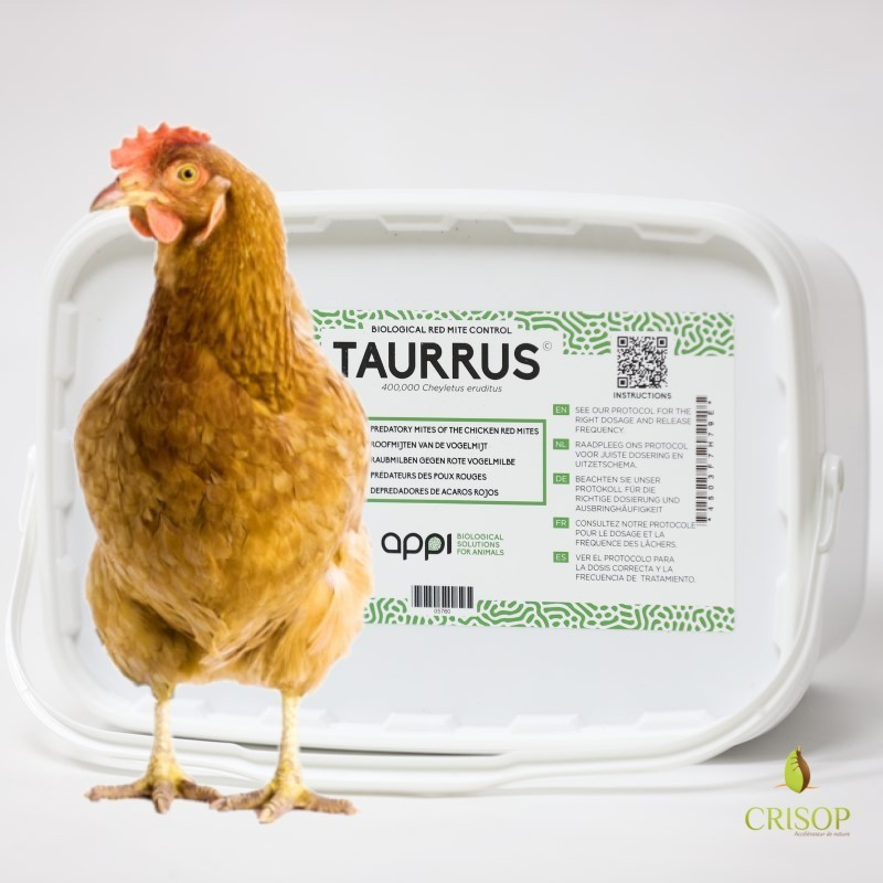 Seau Taurrus Pro