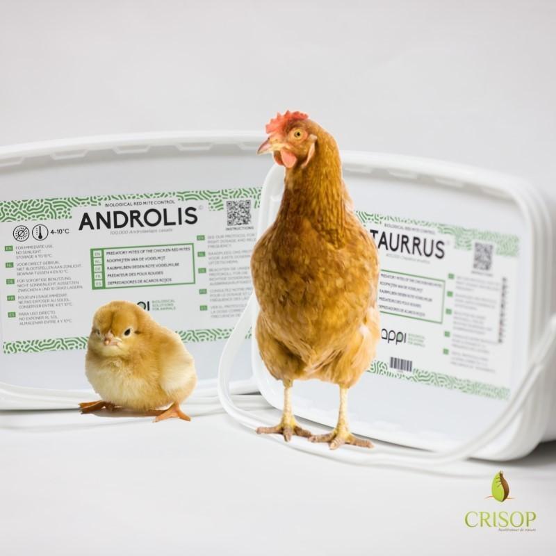 Duo Androlis Pro et Taurrus Pro
