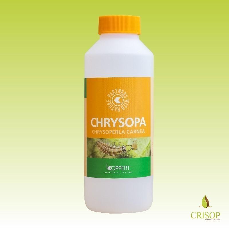 Flacon de Chrysopa