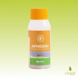 Aphidoletes aphidimyza adulte