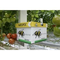 Natupol installé en cultures de tomates