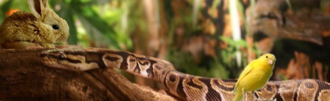 Nouveaux Animaux de Compagnie - Reptiles et compagnie