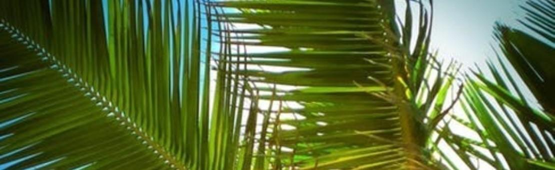 Des solutions pour préserver les végétaux