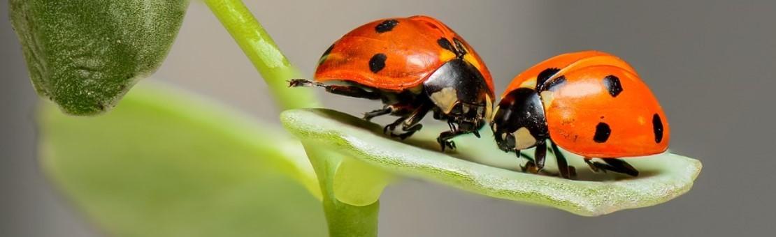 Les insectes vivants et autres agents naturels